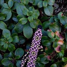 Pattern #28913 Photo