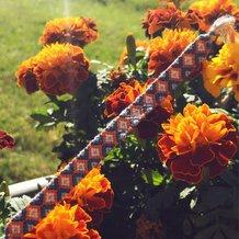 Pattern #25930 Photo