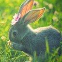 bunnyknots
