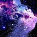 allie_cat