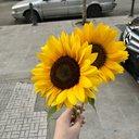 sunshine55