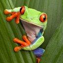ribbitfrog