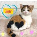 KittenLove