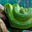 snake21