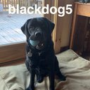 blackdog5