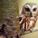 owly_13