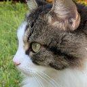 KittyCat77
