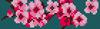 Alpha pattern #10881 variation #51441